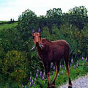 Lupine Loving Moose Poster