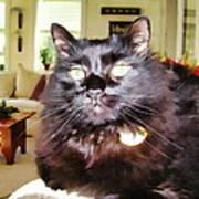 Lura Leigh Kitty Poster