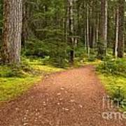 Lush Green Forest At Cheakamus Poster