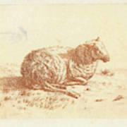 Lying Sheep, Ernst Willem Jan Bagelaar Poster