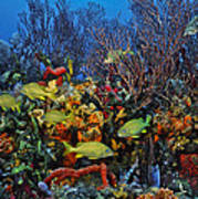 Lynns Reef On A Perfect Day Poster