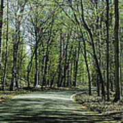 M119 Tunnel Of Trees Michigan Poster