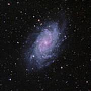 M33--the Triangulum Galaxy Poster