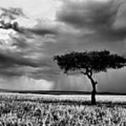 Maasai Mara In Black And White Poster