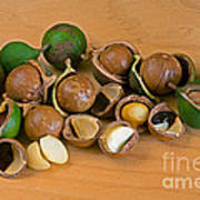 Macadamia Nuts Poster
