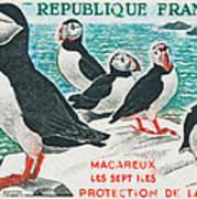 Macareux Seven Islands Conservation Poster