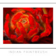Indian Paintbrush Poster Poster