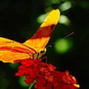 Macro Of An Orange Butterfly Poster