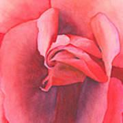 Macro Rose Poster