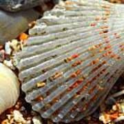 Macro Shell On Sand 4 Poster by Riad Belhimer