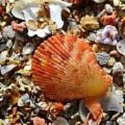 Macro Shell On Sand Poster by Riad Belhimer