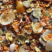 Macro Shells On Sand3 Poster by Riad Belhimer