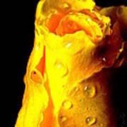 Macro Yellow Rose 2 Poster