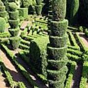 Madeira Botanic Gardens Topiary Poster