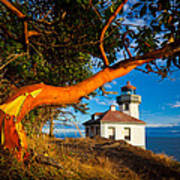 Madrone And Lighthouse Poster