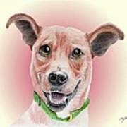 Maggie Former Shelter Sweetie Poster