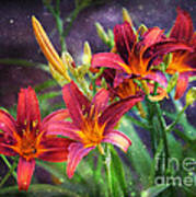 Magical Evening Daylilies Poster