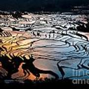Magnificent Rice Terrace Poster