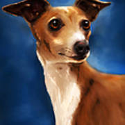 Magnifico - Italian Greyhound Poster by Michelle Wrighton