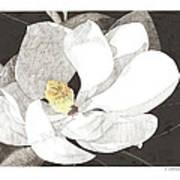 Magnolia 1 Poster