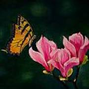 Magnolia And Butterfly Poster