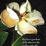 Magnolia Blossom In All Its Glory - Keep Love In Your Heart Poster