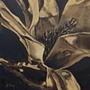 Magnolia Blossom In Sepia Poster