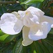 Magnolia Bud Poster