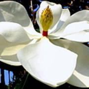 Magnolia Carousel Poster