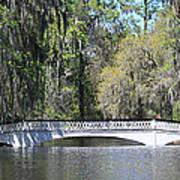 Charleston Sc Magnolia Gardens  Poster by Ella Char