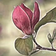 Magnolia Glow Poster
