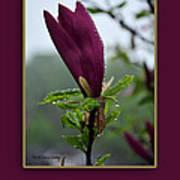 Magnolia Greeting Poster