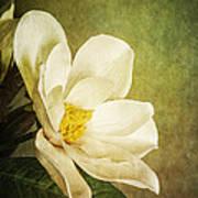 Magnolia Morning Poster