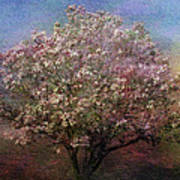Magnolia Tree In Bloom Poster