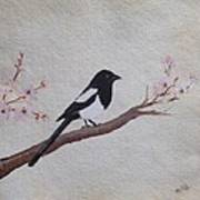 Magpie On Cherryblossm Tree Poster