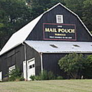 Mail Pouch Barn And Two Foxes Poster