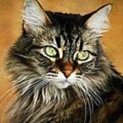 Maine Coon In Topaz Poster