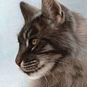 Maine Coon Painting Poster