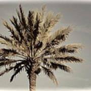 Majestic Palm Poster
