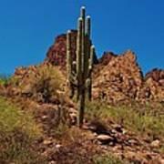 Majestic Saguaro Poster