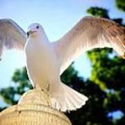 Majestic Seagull II Poster