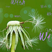 Make A Wish Card Poster by Lisa Knechtel
