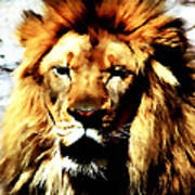 Male African Lion 2 Poster