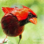 Male Cardinal Close Up - Digital Paint Poster