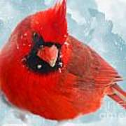 Male Cardinal On Snow Day - Dgital Paint Poster
