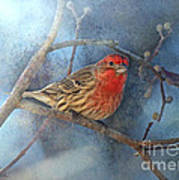 Male House Finch With Blue Texture Poster