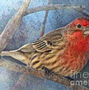 Male Housefinch Close View Poster