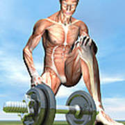 Male Musculature Looking At A Dumbbell Poster