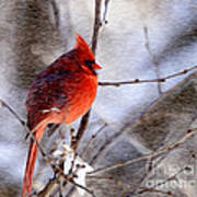 Male Northern Cardinal Oil Paint Effect Poster