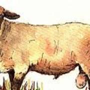 Male sheep black Poster